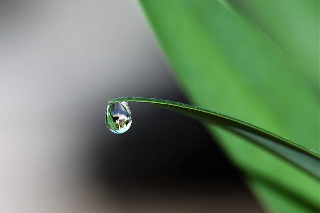 Jak zbierać wodę deszczową?